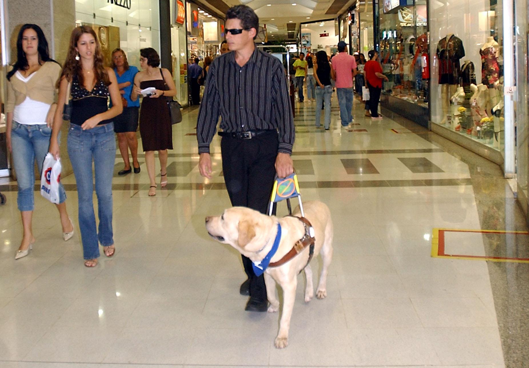 Cane guida per persone cieche