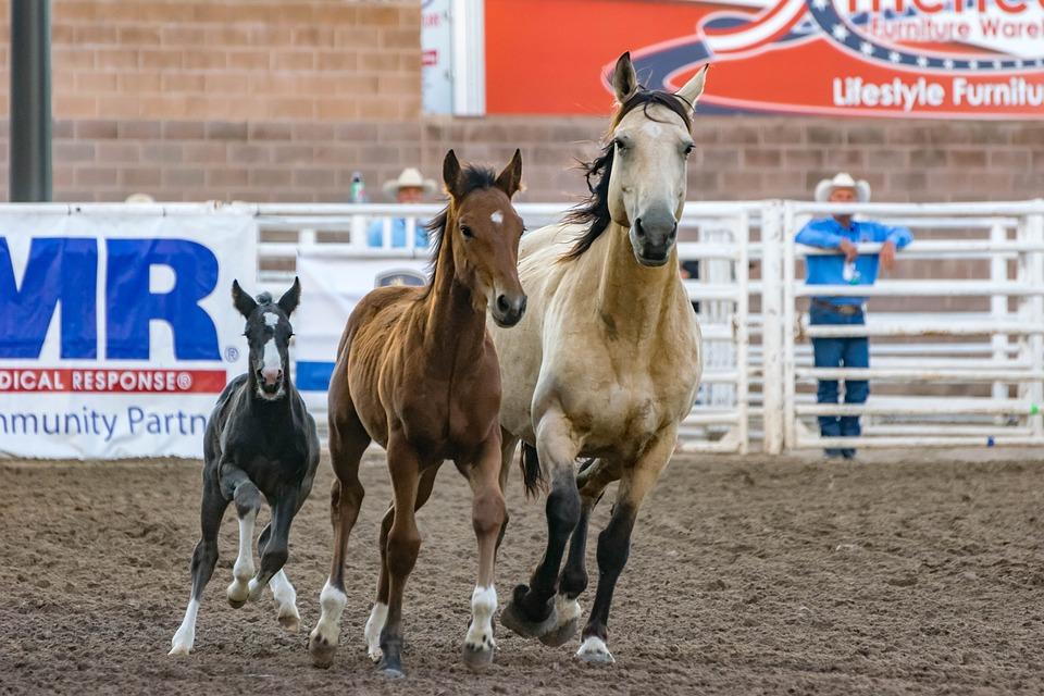 tre cavalli uno di fianco all'altro camminano al maneggio